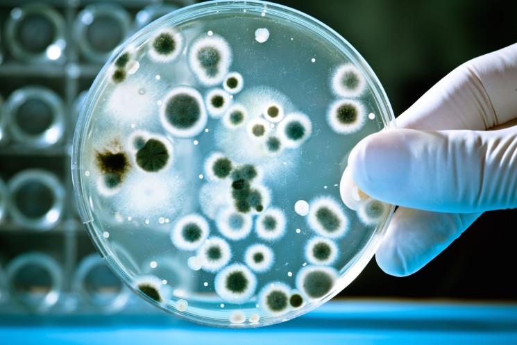Durante estos días se desarrolla el Congreso de Microbiología más importante del país