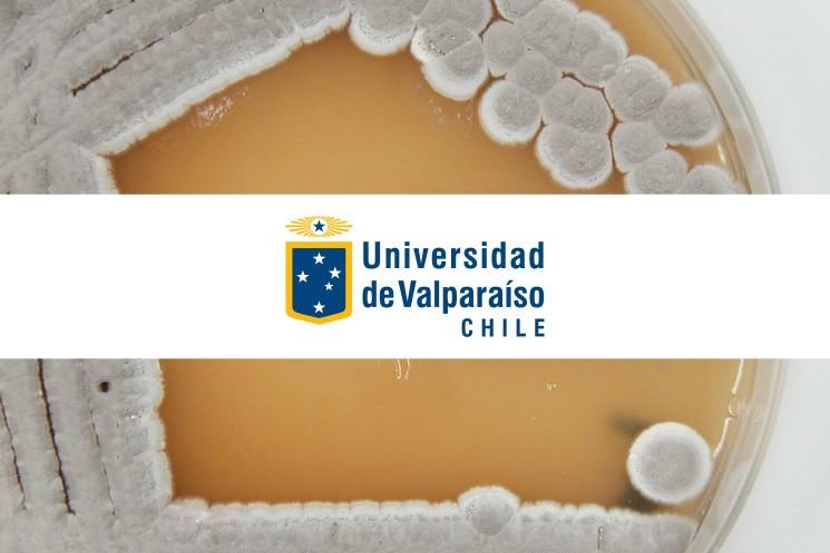 Llamado a postular – Escuela de Nutrición y Dietética de la Facultad de Farmacia de la Universidad de Valparaíso