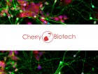 Postdocs related to biology/lab on chip for positions in 2017 into a french innovative company
