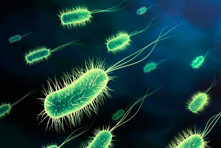 Escherichia coli in the Americas