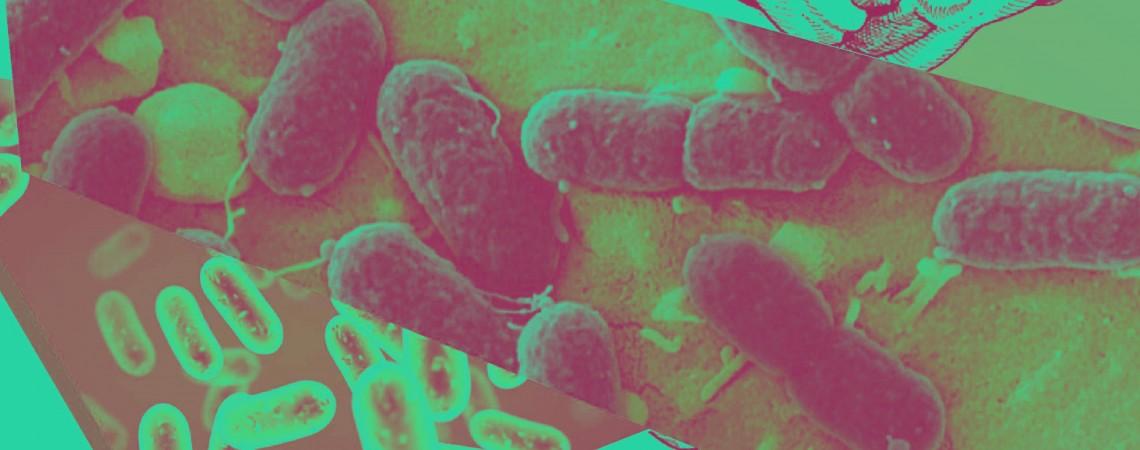 Curso Teórico-Práctico Diversidad Microbiana