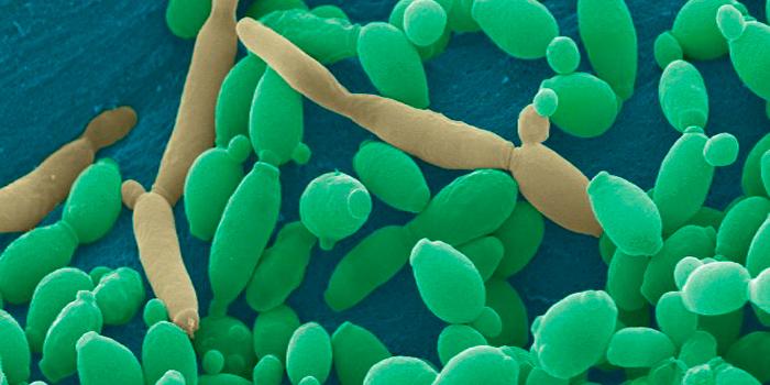 Adminsión Magister en Microbiología