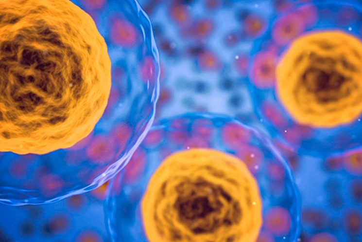 Postdoctoral Position(s) in Molecular Virology Focusing on Pneumovirus Entry, Replication and Spread